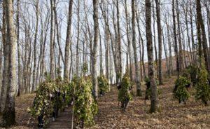 La Foresta che cammina @ Satriano di Lucania